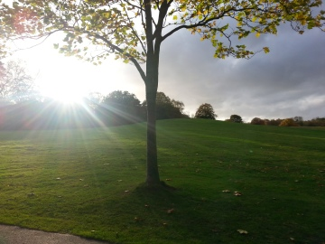 sun rays, autumn tree, Manchester sunset